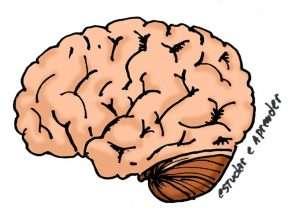 cerebro-do-estudante