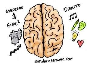 cerebro-esquerdo-direito